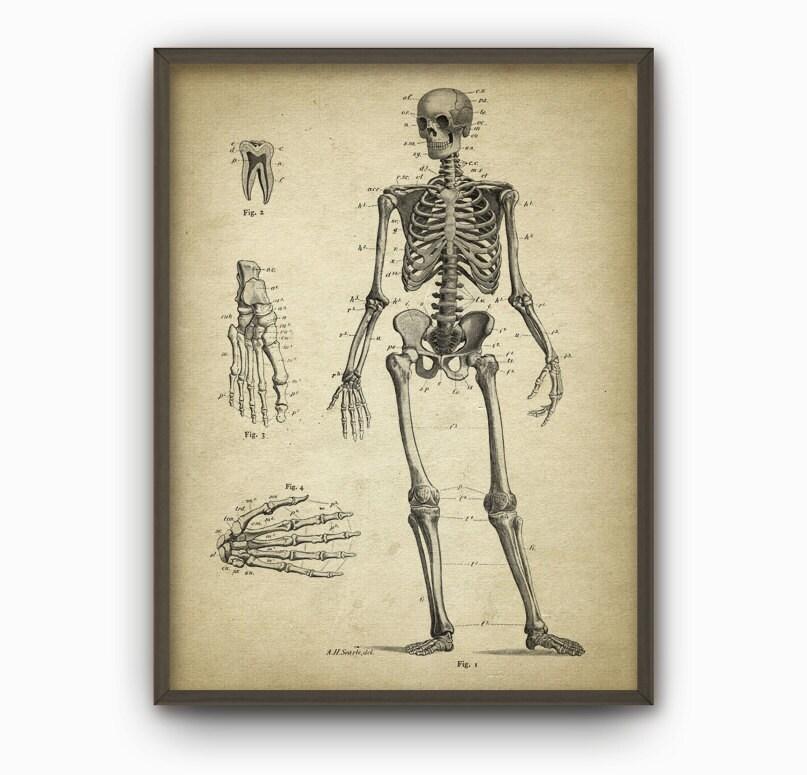 Menschliches Skelett Anatomie antike Wand Kunst Poster 5   Etsy