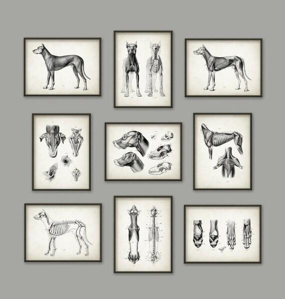 Hund Anatomie Poster Set 9 Hund Illustration druckt | Etsy