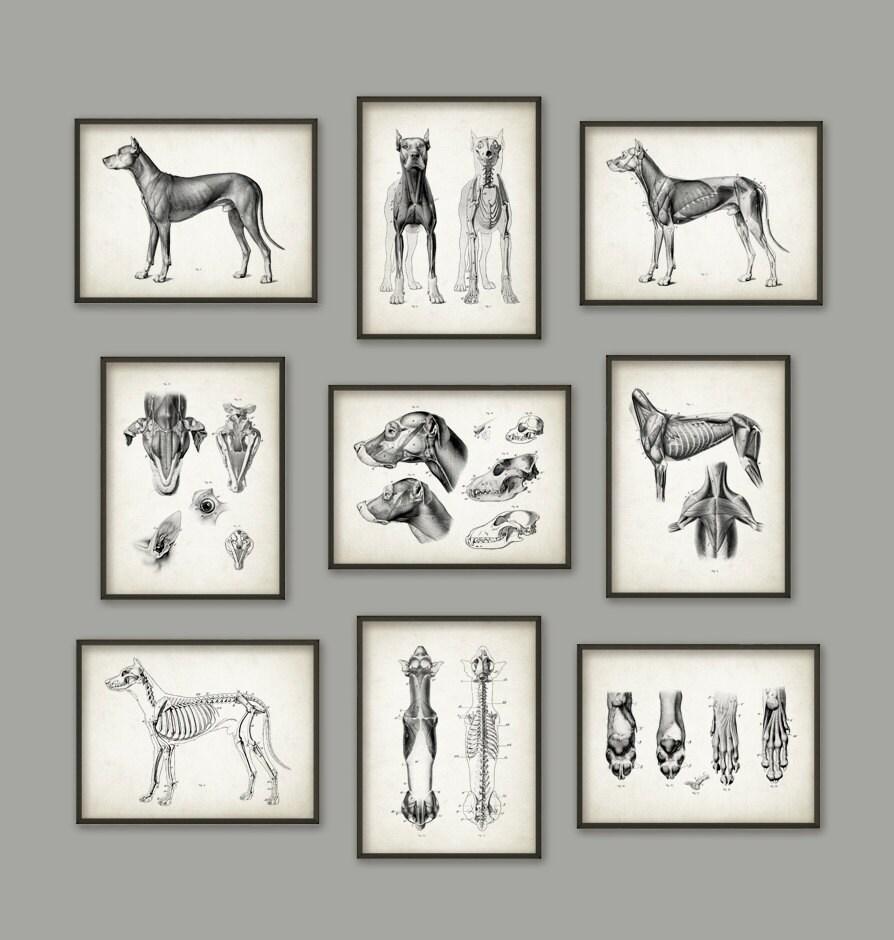 Hund Anatomie Poster Set 9 Hund Illustration druckt   Etsy