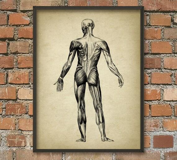 Muskelmann Vintage Anatomie Wand Kunst Poster 2 anatomische | Etsy