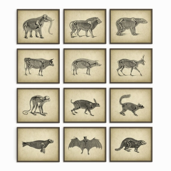 Animal Anatomy Posters Set Of 12 Vintage Anatomy Etsy