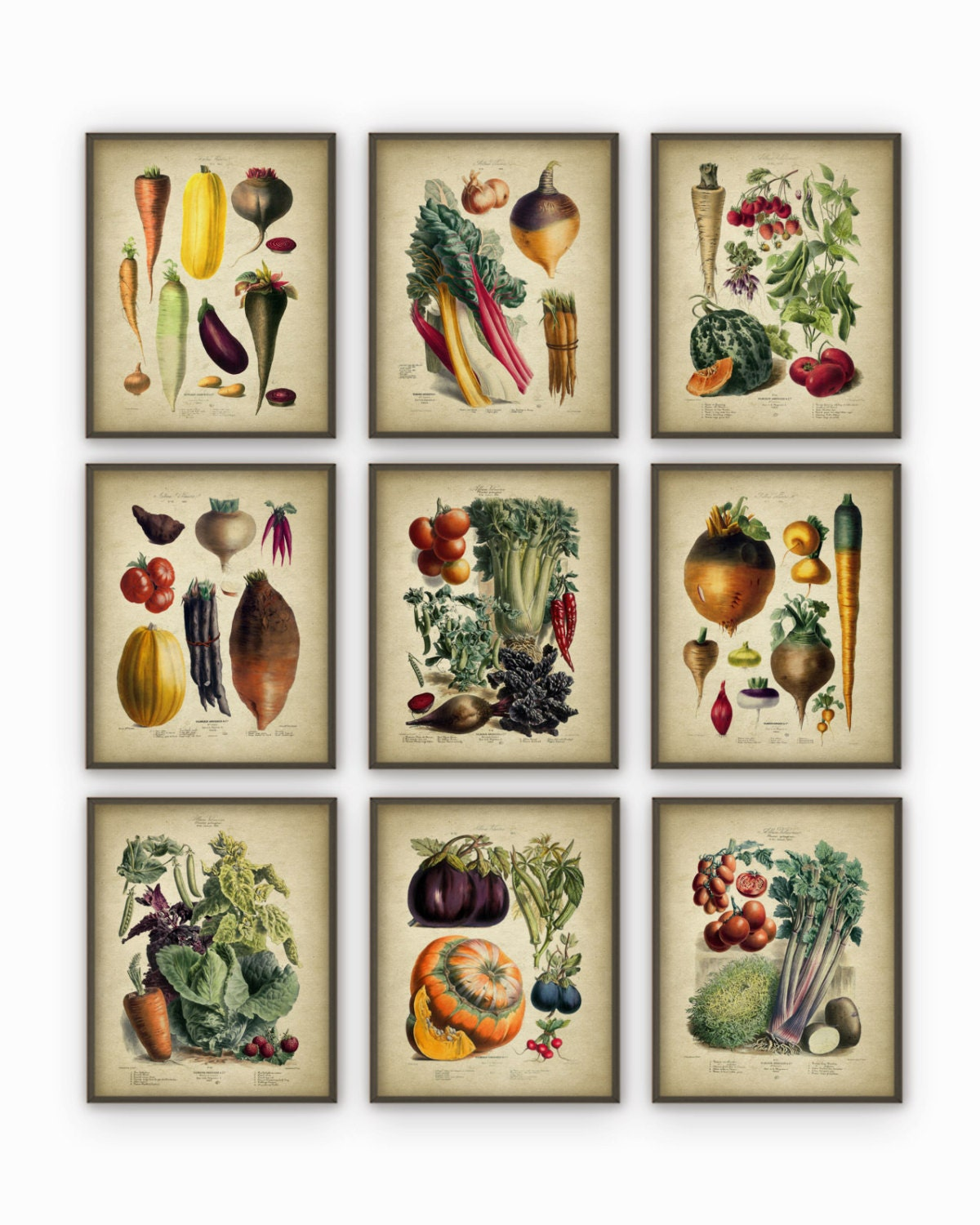 Kitchen Art Vegetables Print Botanicals Kitchen Art: Vegetables Kitchen Wall Art Print Set Of 9 Antique