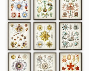 Haeckel Wall Art Posters Set of 9 - Haeckel Antique Illustration Prints - Vintage Marine Biology - Haeckel Art Home Decor - AB367