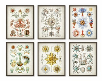 Haeckel Wall Art Posters Set of 6 - Haeckel Antique Illustration Prints - Vintage Marine Biology - Haeckel Art Home Decor - AB366