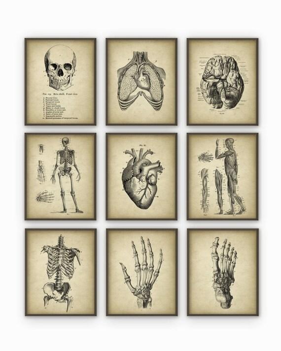 Anatomía humana antiguo conjunto lámina de 9 Vintage | Etsy