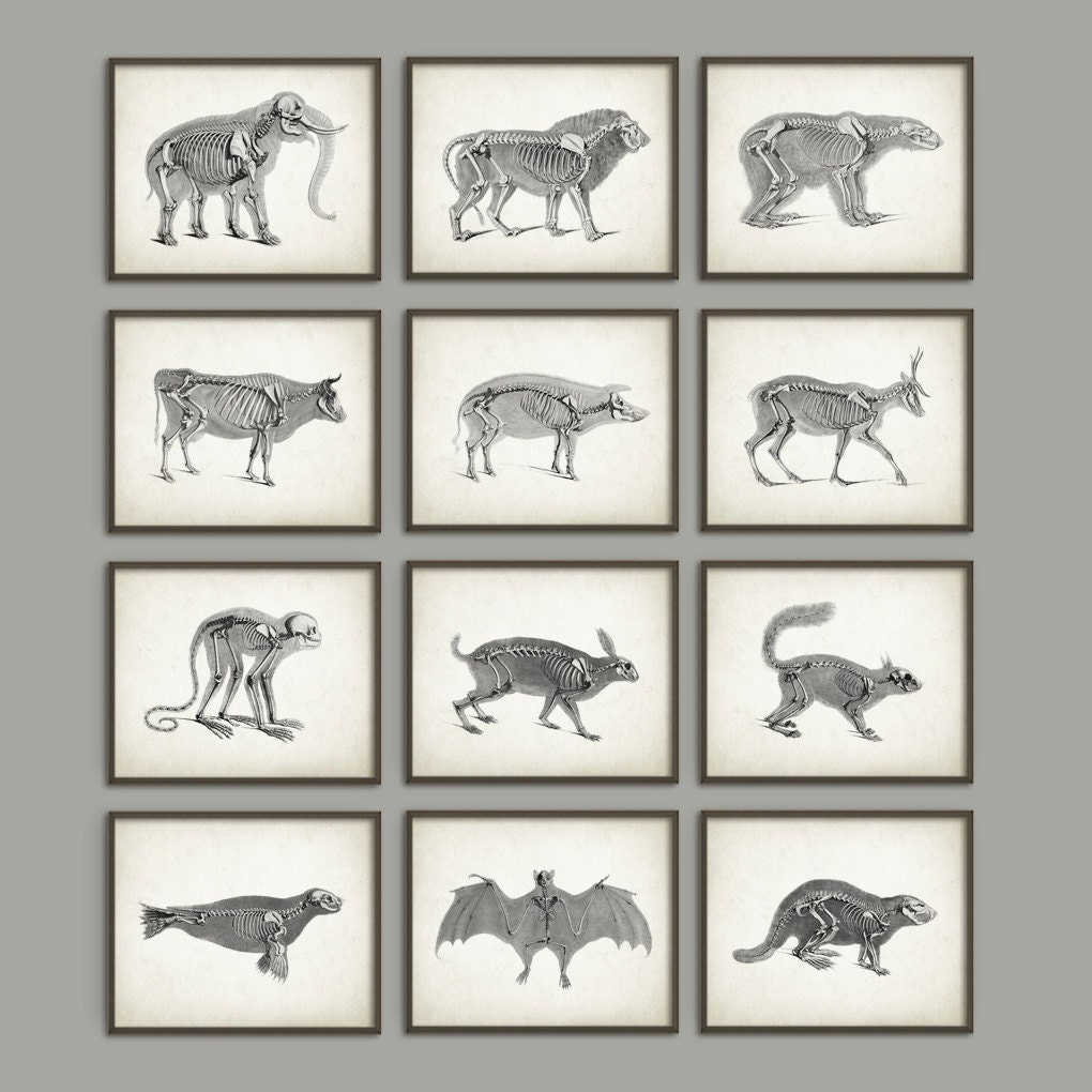 Outstanding Antique Anatomy Posters Pictures - Anatomy Ideas ...