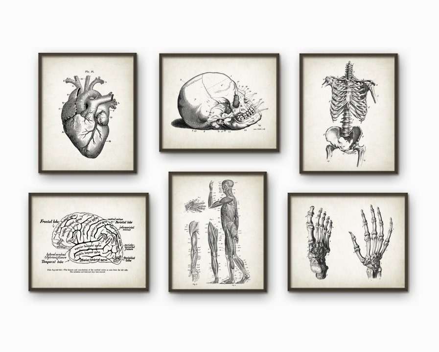 Menschliche Anatomie Antique Kunstdruck Set 6 Vintage   Etsy