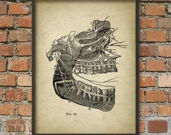 Nerves Of The Mouth Antique Anatomy - Human Biology Wall Art Poster - Medical Student - Dentist