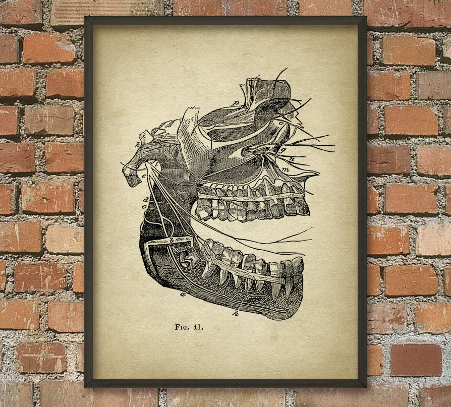 Nerven der Mund antiken Anatomie Humanbiologie Wand Kunst | Etsy