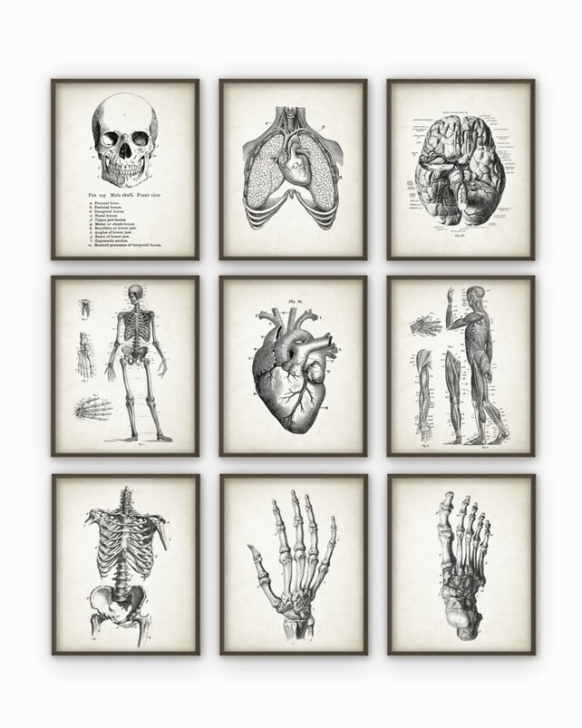 Menschliche Anatomie Antique Kunstdruck-Set 9 Vintage   Etsy