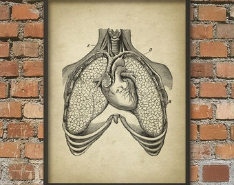 Lungs and Heart Antique Anatomy Wall Art Poster