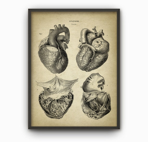 Heart Anatomy Art Poster 2 Vintage Heart Book Plate | Etsy