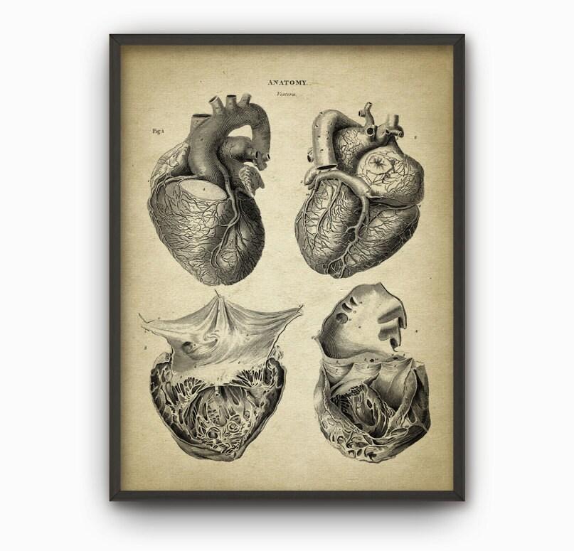 Corazón anatomía arte cartel 2 corazón Vintage libro placa | Etsy