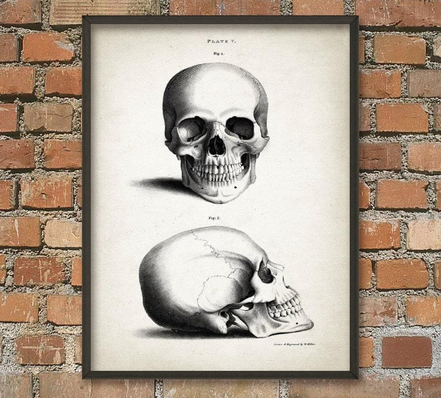 Cráneo humano impresión antiguo cráneo anatomía pared | Etsy