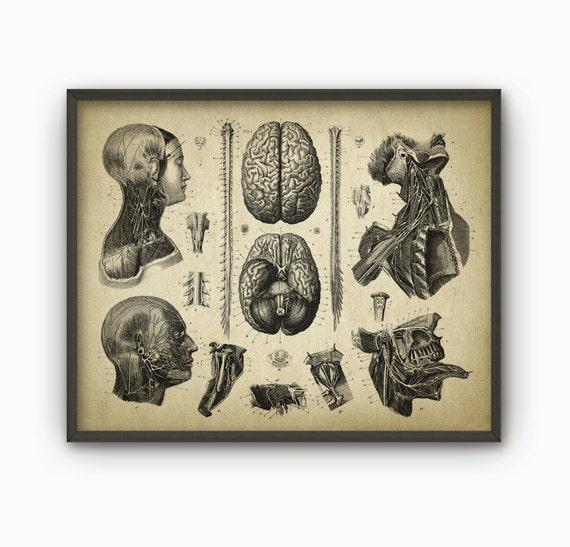 Cerebro y cabeza humana antigua anatomía pared arte cartel | Etsy