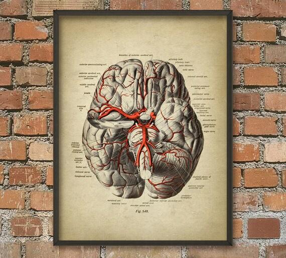 Gehirn Arterien Poster 3 antike Gehirn Anatomie | Etsy
