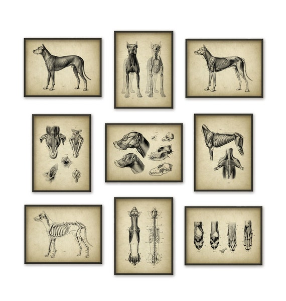 Dog Anatomy Posters Set Of 9 Dog Illustration Prints Etsy