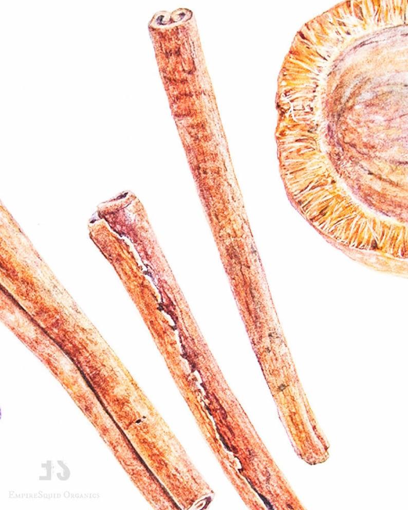 Organic Cassia Oil | Cassia Essential Oil | Cinnamon Oil Substitute Similar  to Cinnamon Bark Essential Oil