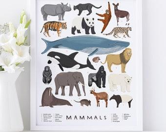 Mammals illustrated print - mammals illustration animal print animal illustration mammal natural history nursery art children's room