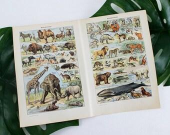 Vintage Animal Poster, Vintage Art Prints, Animal Art Print, Animal Illustration Print, French Dictionary Print, Antique Prints Poster- E366