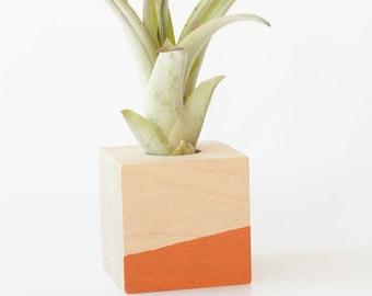 Air Plant Magnet >> Orange Cube