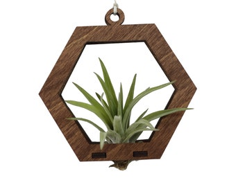 air plant ornament >> hexagon >> walnut