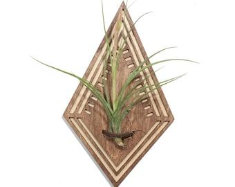 Wood Cut Air Plant Wall Art >> Natural