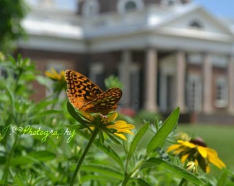 Monticello Butterfly