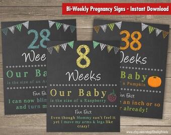 Printable Bi Weekly Pregnancy Countdown Chalkboard Sign Baby Weeks 8 40 Set Of 17 Signs