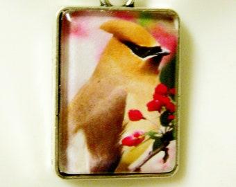 Cedar Waxwing bird pendant with chain - BAP02-027