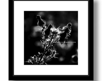 Square Print, Nature Photograph, black and white photograph