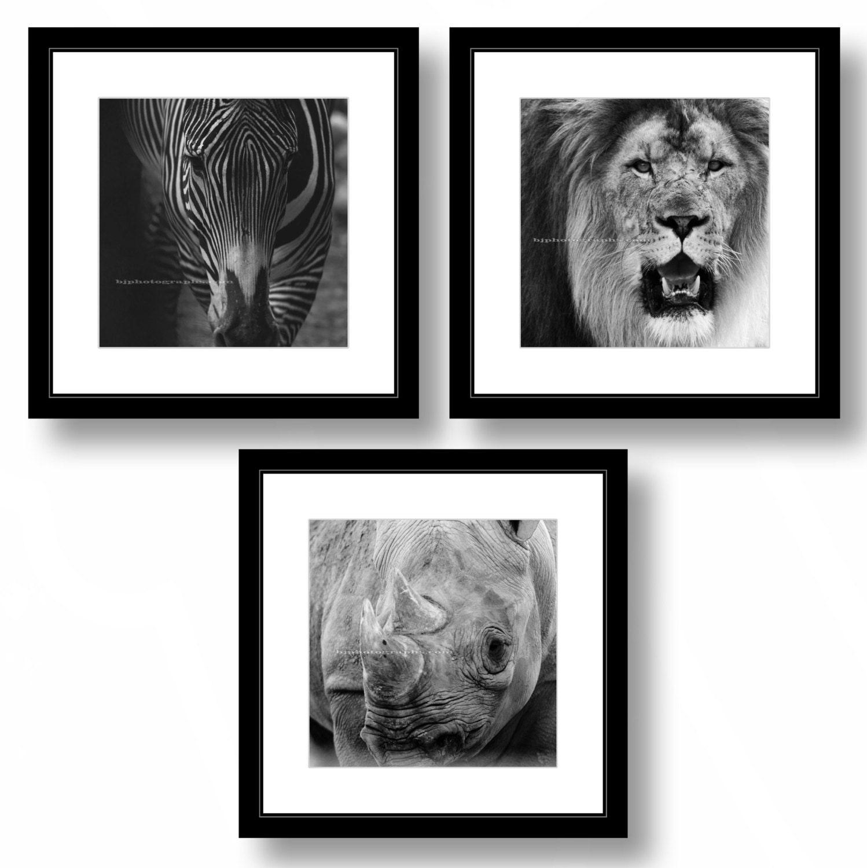 Satz von 3 Tier schwarz-weiß-Fotografien Zebra Löwe