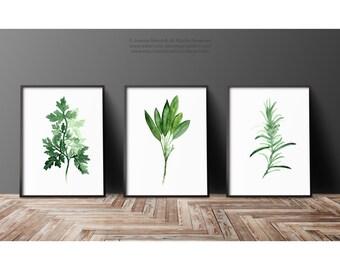 Green Herbs Set of 3 Art Print, Parsley Painting, Rosemary Kitchen Decor, Sage Watercolor, Green Wall Decor