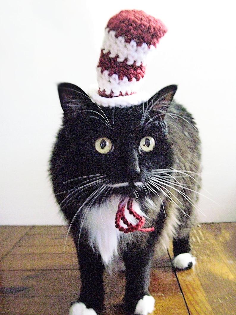 9b7a79d0819 Crochet Cat Hat pattern hat for cat halloween cat hat