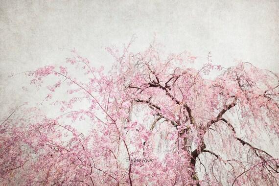 Weeping Cherry Tree Art Pink Flowering Trees Spring Etsy