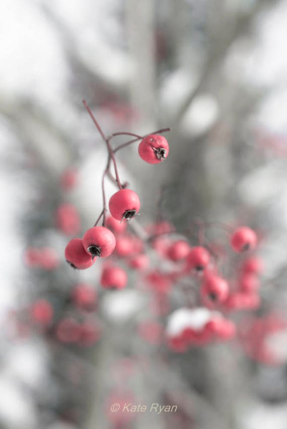 Red Berries Wall Art Winter Snow Landscape Print Red Berries Etsy