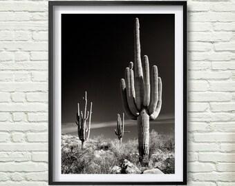 Cactus, Botanical Print, Garden Art, Cactus Print Art, Desert Photography, Arizona, Cacti Print, Cactus Decor, Southwestern Art, Nature *88*