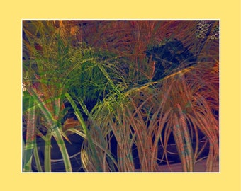 Grass _ I
