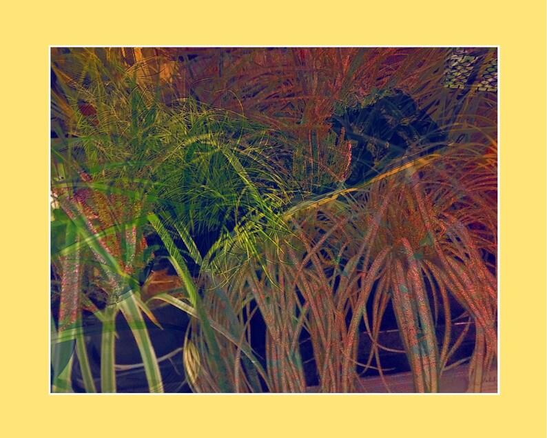 Grass _ I image 0