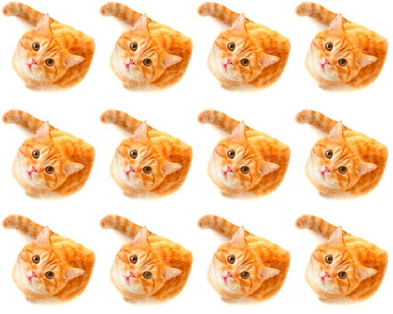 Orange Cats Birthday - Edible Cake Side Toppers- Decorate The Sides of Your Cake! - D24054