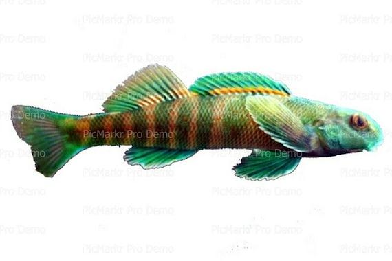 Ocean Life Fish Birthday ~ Edible 2D Fondant Birthday Cake/Cupcake Topper ~ D7953
