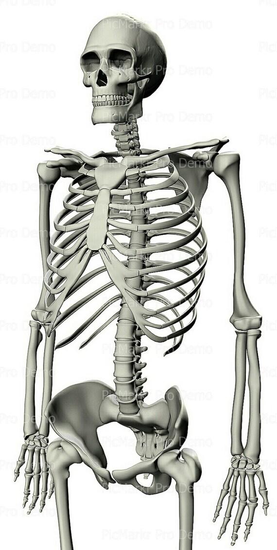 Skeleton Halloween ~ Edible 2D Fondant Birthday Cake/Cupcake Topper ~ D5859
