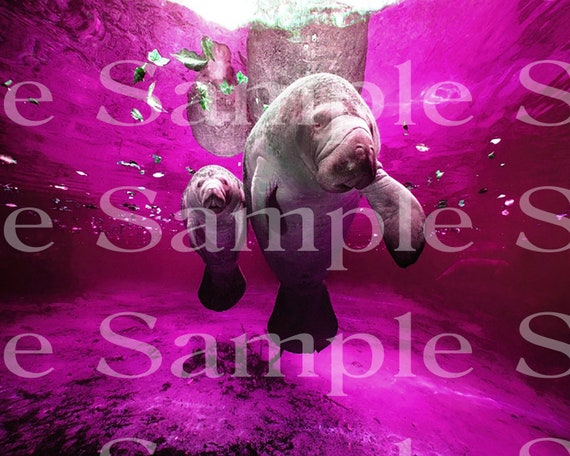 Purple Manatees Birthday ~ Edible 2D Fondant Birthday Cake/Cupcake Topper ~ D24519