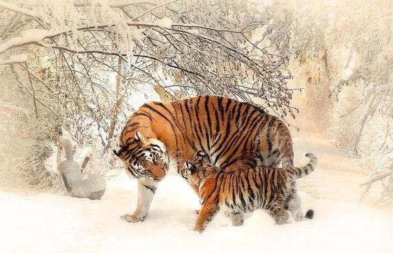 Winter Tigers Birthday ~ Edible 2D Fondant Birthday Cake/Cupcake Topper ~ D24026