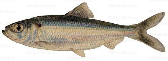 Ocean Life Fish Birthday ~ Edible 2D Fondant Birthday Cake/Cupcake Topper ~ D7931