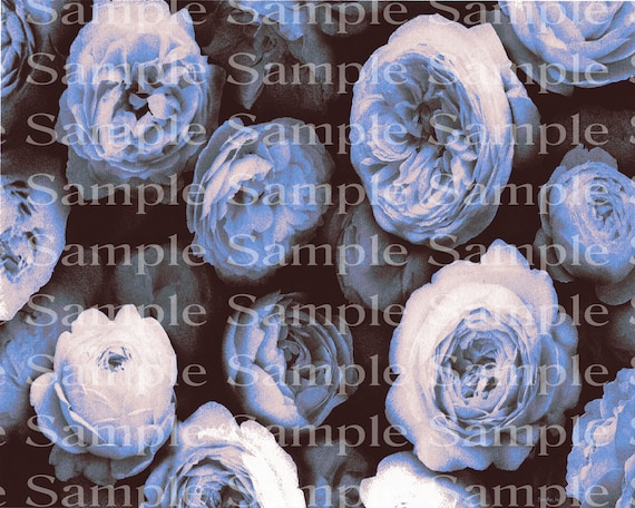 Blue Roses Birthday - Edible Cake and Cupcake Topper For Birthday's and Parties! - D24179