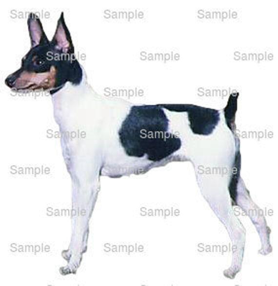 Toy Fox Terrier Dog Birthday ~ Edible 2D Fondant Birthday Cake/Cupcake Topper ~ D6752