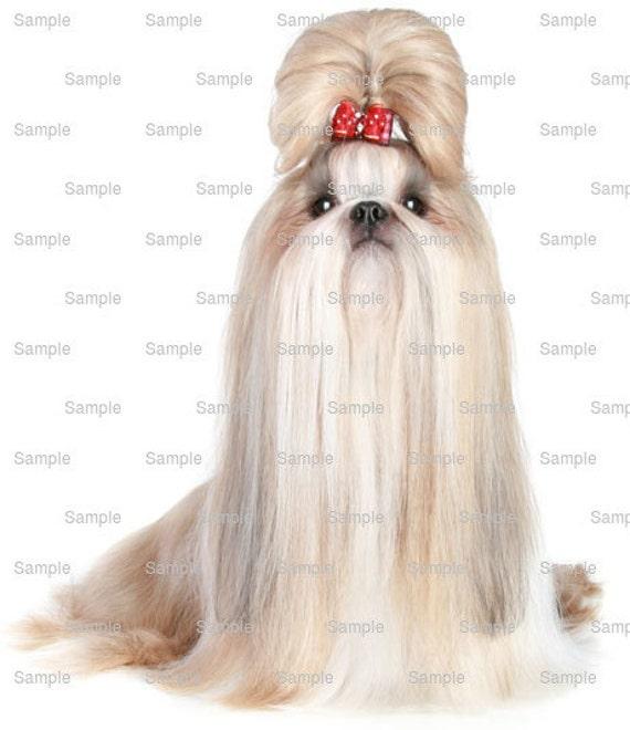 Shih Tzu Dog Birthday ~ Edible 2D Fondant Birthday Cake/Cupcake Topper ~ D6739