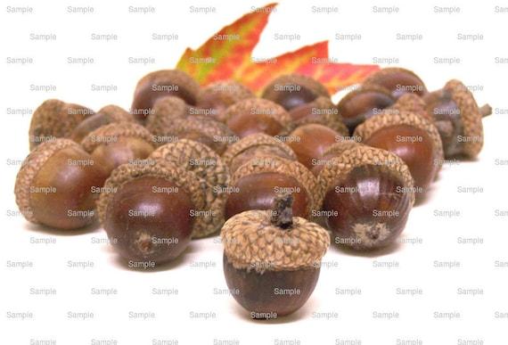 Acorns Fall Thanksgiving Halloween ~ Edible 2D Fondant Birthday Cake/Cupcake Topper ~ D3400