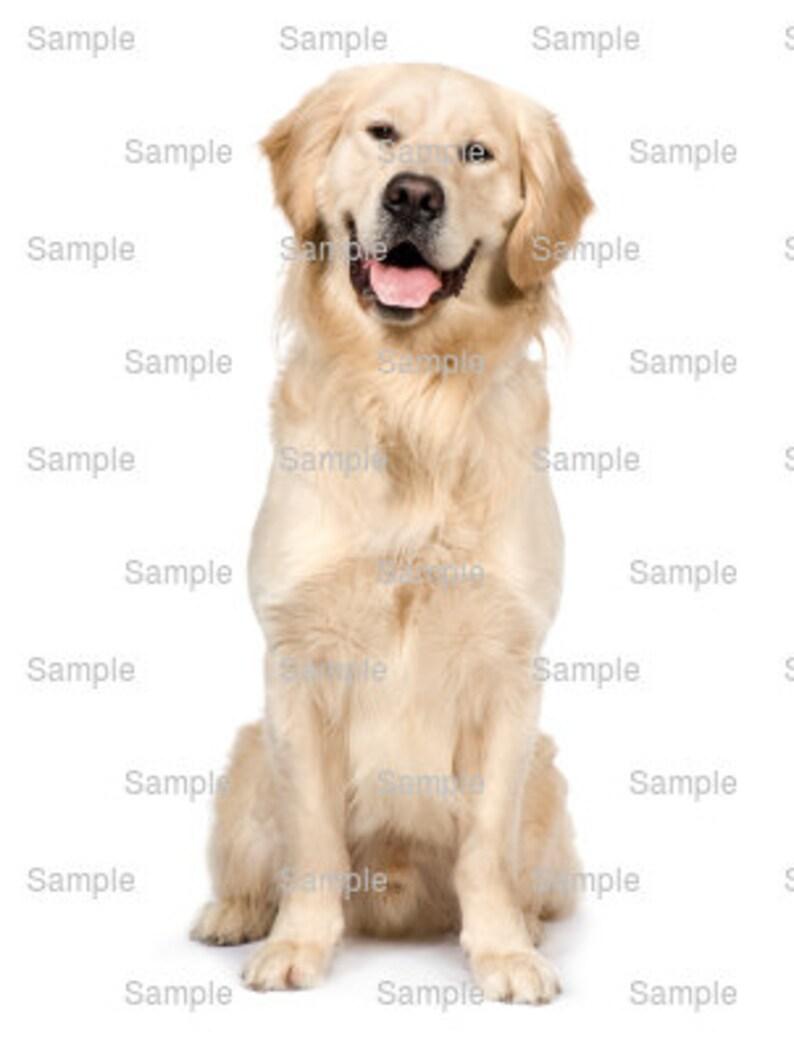 Peachy Golden Retriever Dog Birthday Edible 2D Fondant Birthday Etsy Funny Birthday Cards Online Alyptdamsfinfo